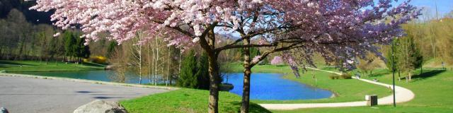 Prunus - Lac de La Mirance Allevard-les-Bains